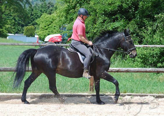 ich liebe dieses Pferd
