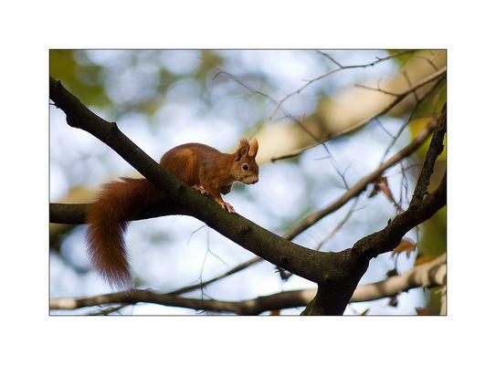 Ich liebe Hörnchen...