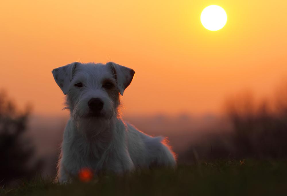 Ich liebe Sonnenuntergänge...