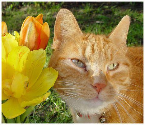 Ich liebe Tulpen....