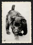 Ich lieb(t)e Hunde.... 73´