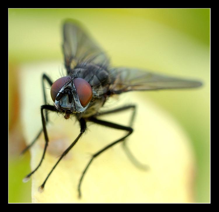 Ich mach mal die Fliege...