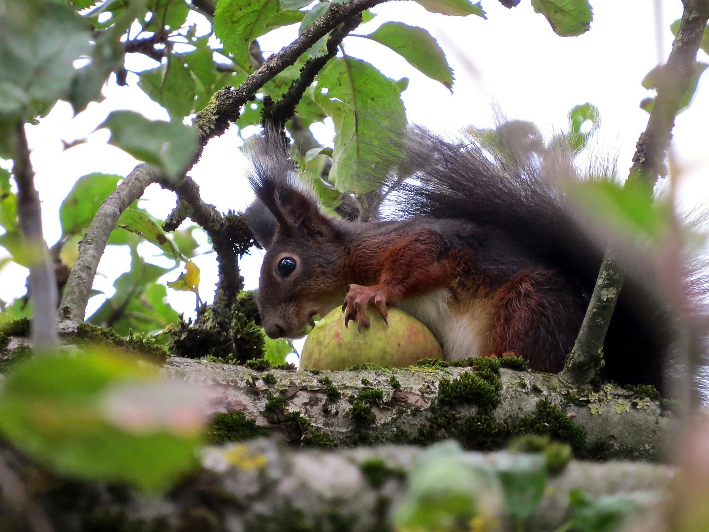 Ich mag auch Äpfel...