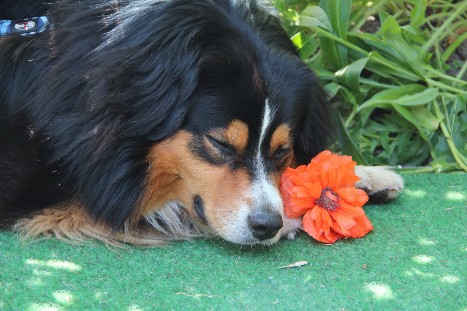 Ich mag Blumen