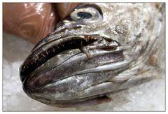 Ich mag Fisch ...