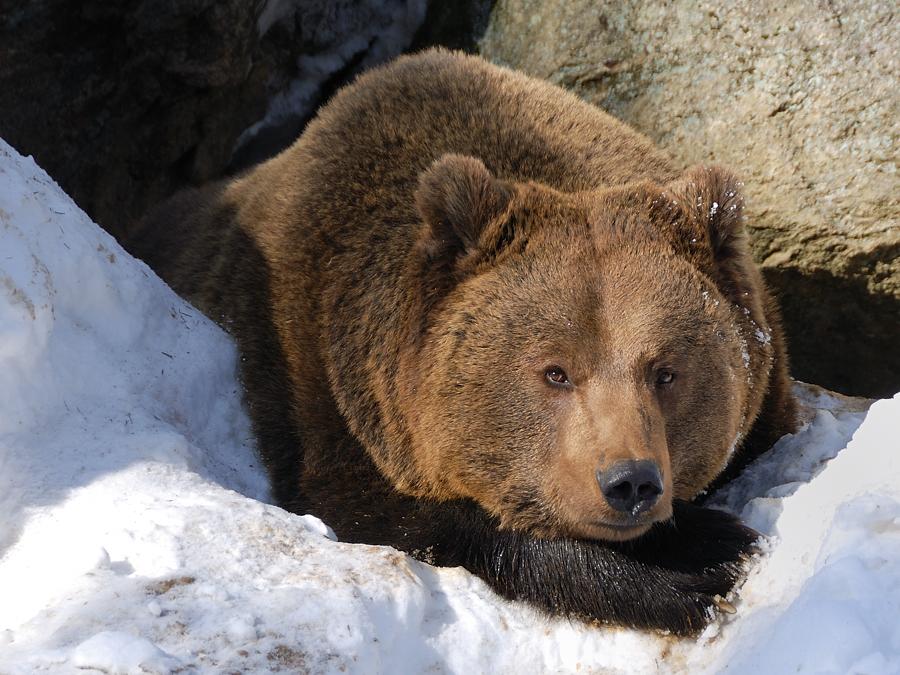 ich mag keinen winterschlaf foto bild tiere zoo wildpark falknerei s ugetiere bilder. Black Bedroom Furniture Sets. Home Design Ideas