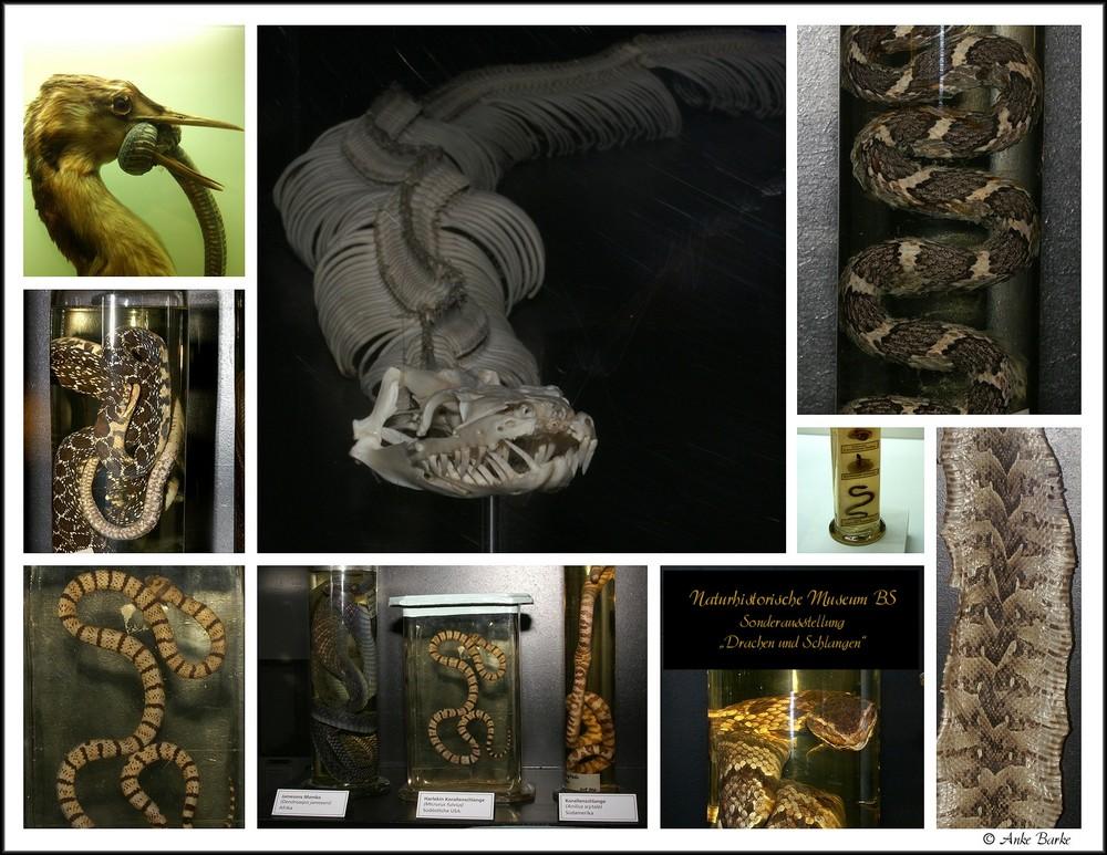 Ich mag Schlangen