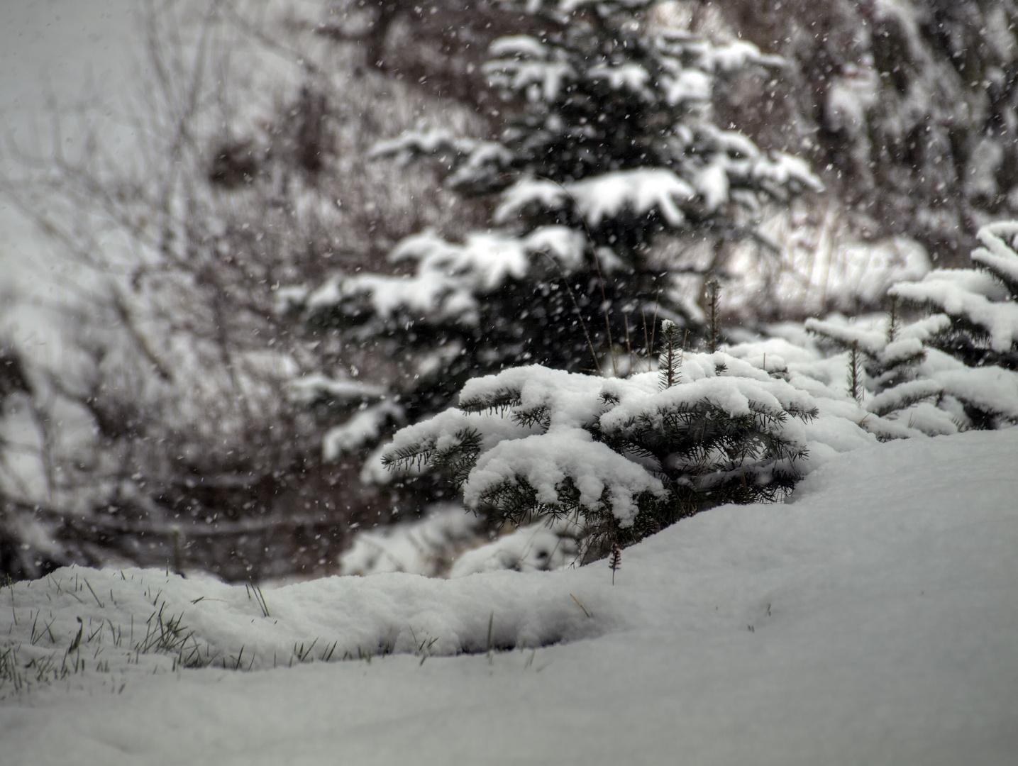 Ich mag solch Winterwetter eigentlich, doch...