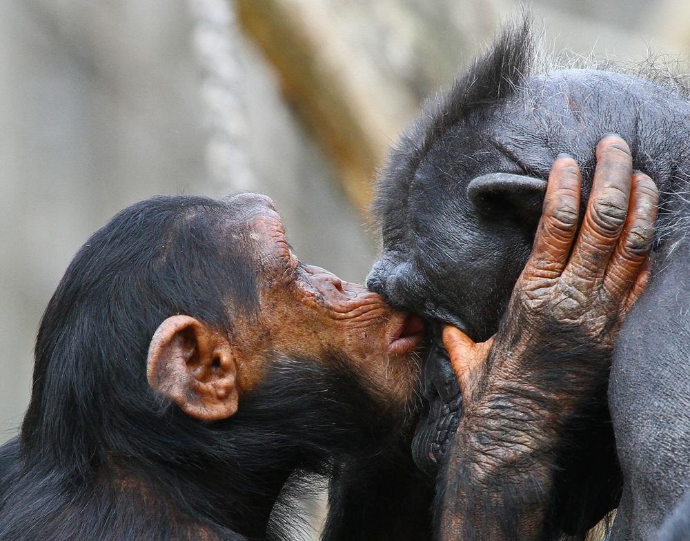 """Ich muß dich einfach küssen."""" schmatz"""""""