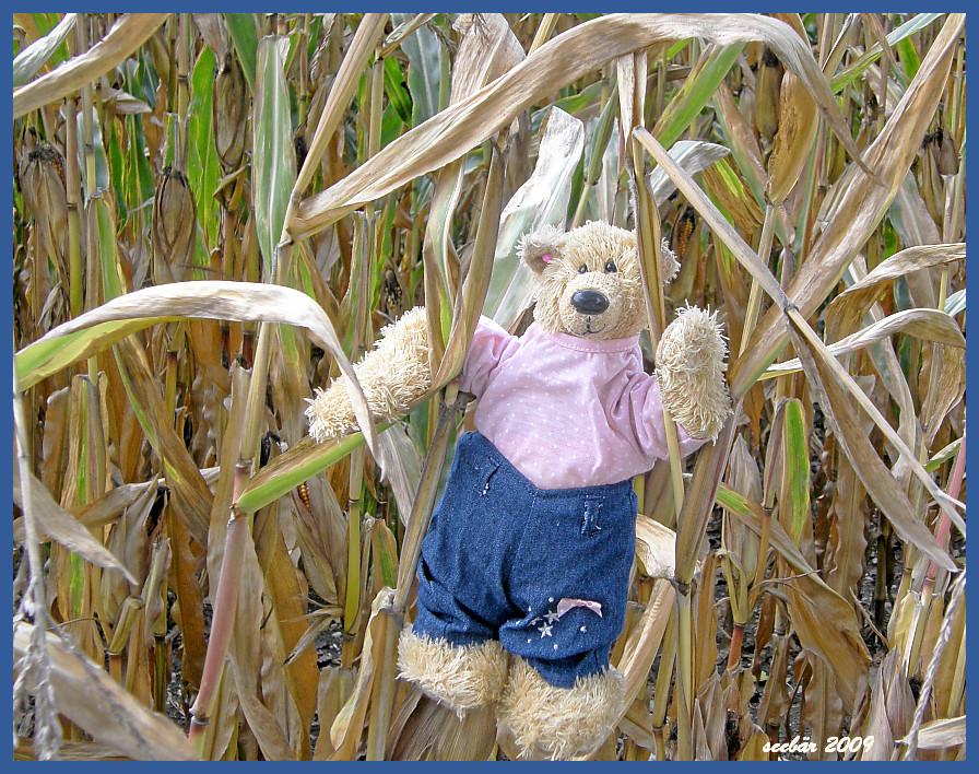ich muß mal ins maisfeld, kein dixi in der nähe . bitte dreht euch um