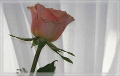 Ich muss mal meinen Ordner Rosen auffüllen...