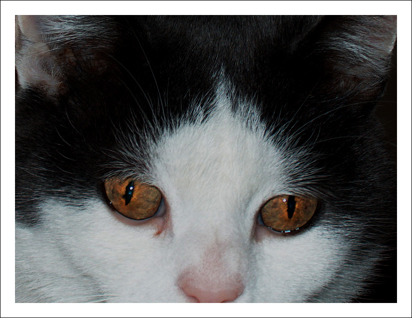 Ich schau Dir in die Augen...