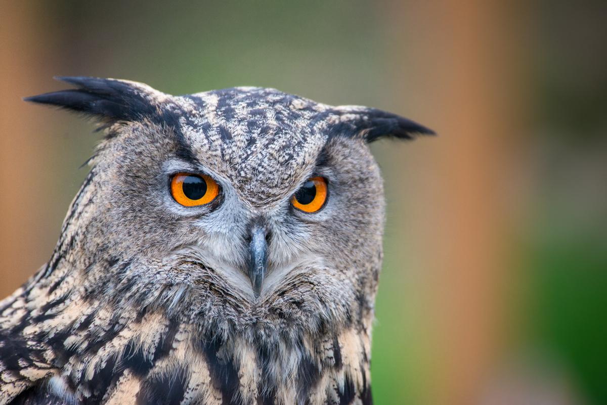 Ich schau Dir in die Augen.....