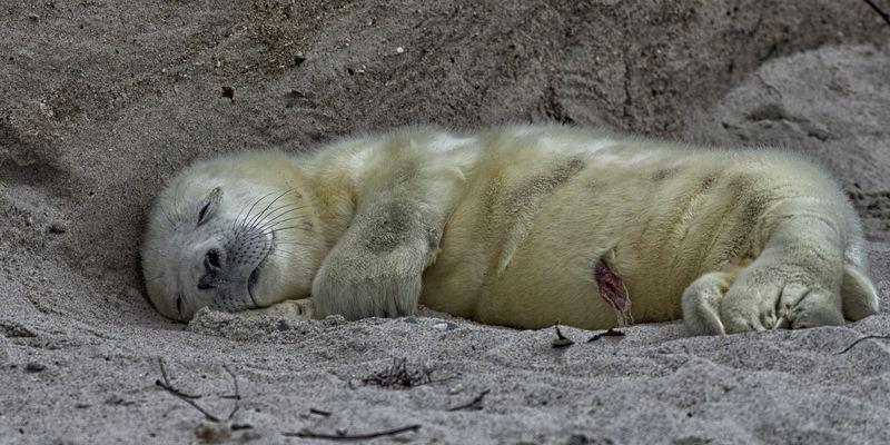 Ich schlaf mich groß