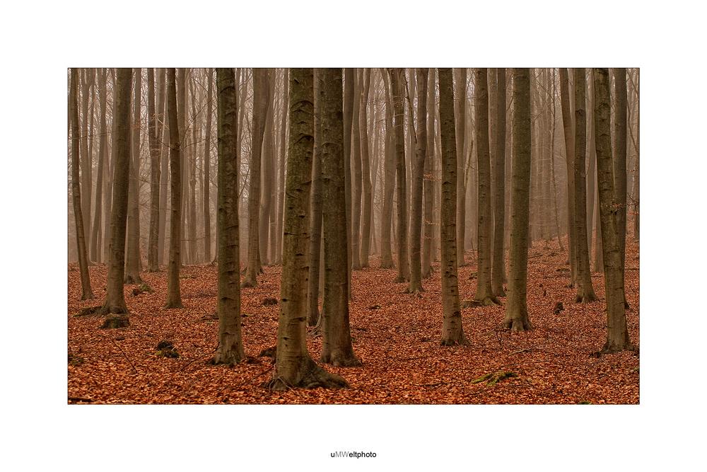 Ich seh den Wald nicht