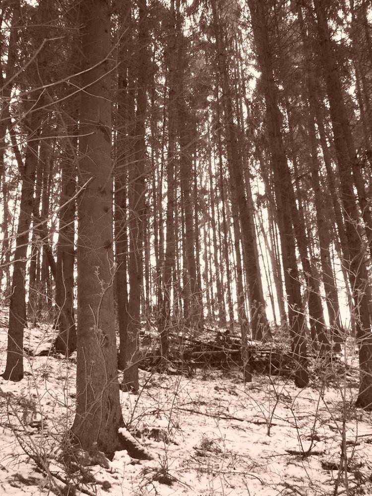 ich seh den wald vor lauter bäumen nicht...