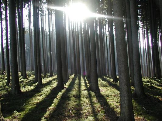 Ich seh den Wald vor lauter Bäumen nicht... ;-))