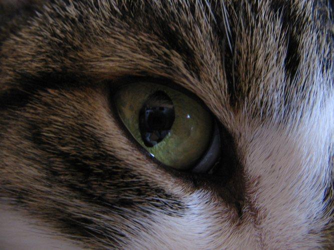 Ich seh Dich