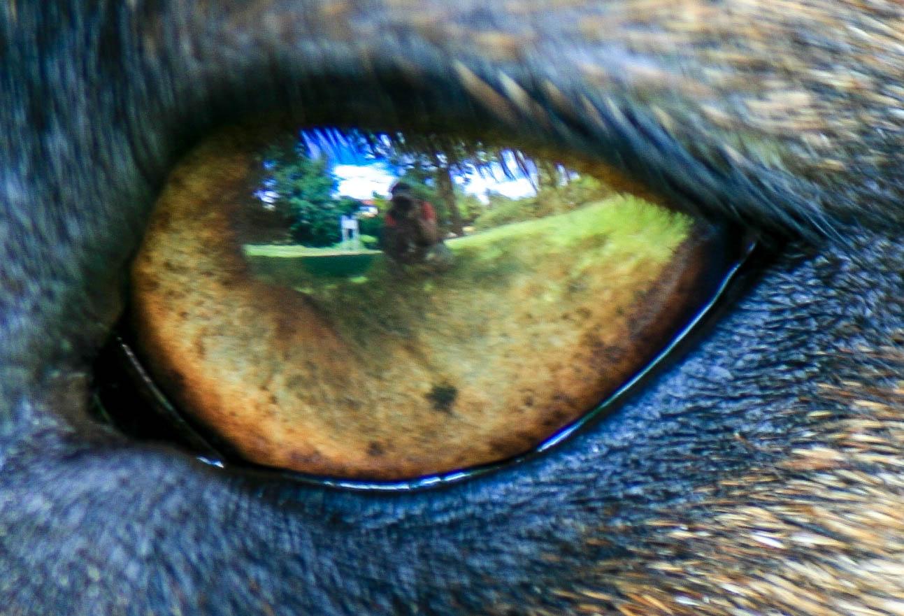 .....Ich seh Dich.....
