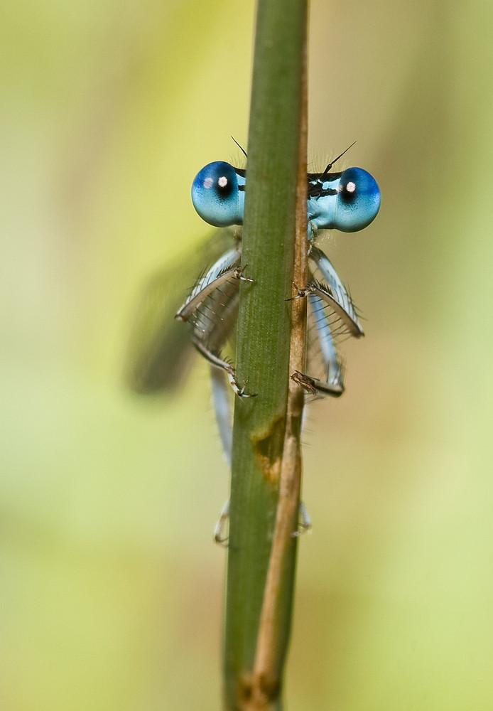 Ich seh dich...!