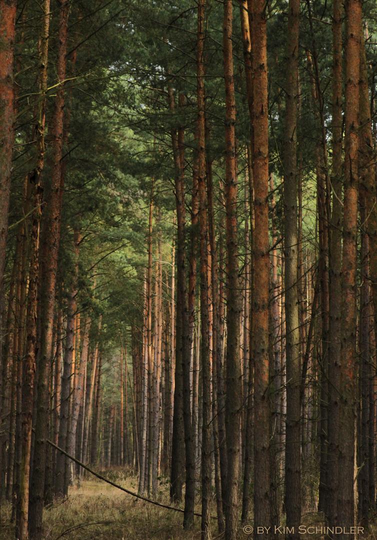 """""""Ich sehe den Baum vor lauter Wald nicht mehr..."""""""