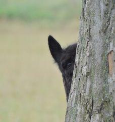 ich sehe Dich :-))