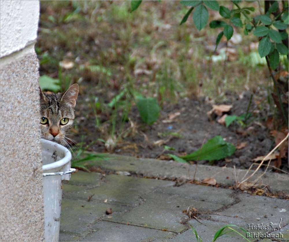 ich sehe euch, aber ihr seht mich nicht -