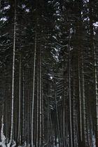 Ich sehe vor lauter Bäumen den Wald nicht mehr..... Du auch???