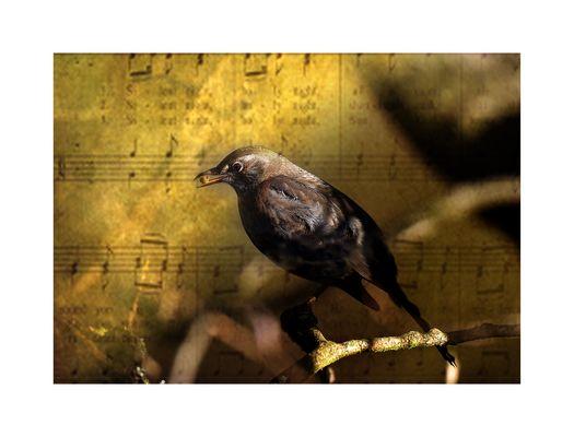 ich sing ein Lied für Dich....