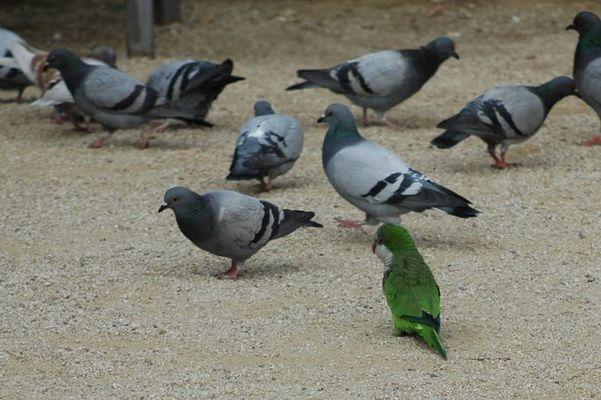 Ich soll keine Taube sein.