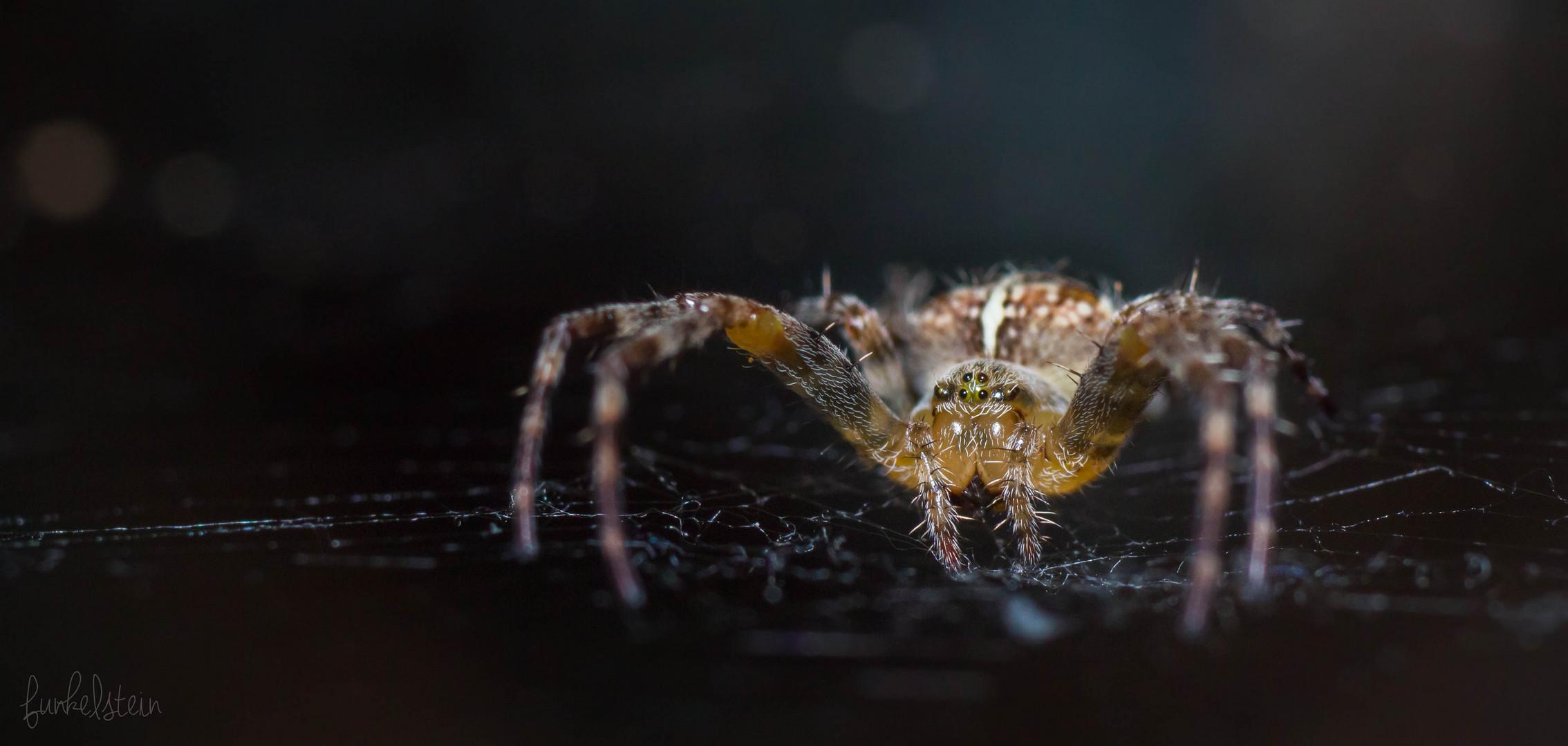Ich: Spinne