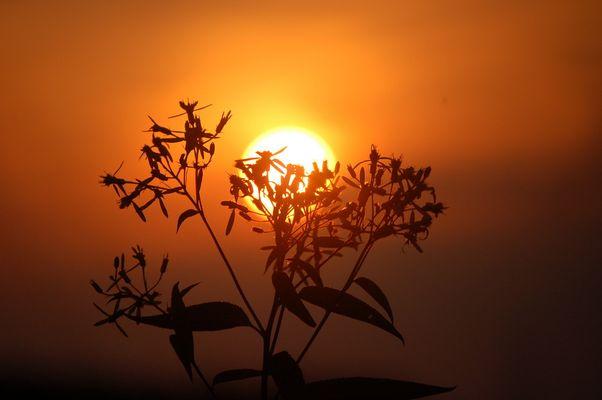 Ich stehe vor der Sonne