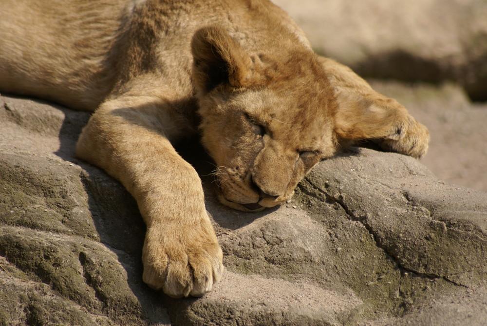 Ich träum ich werde König - and the Lion sleeps tonight