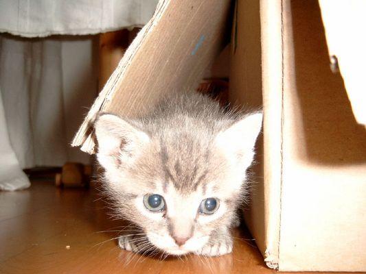 Ich versteck mich!