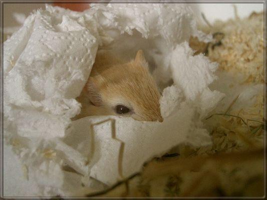 Ich versteck mich