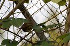 Ich versteck mich hinter den Blättern