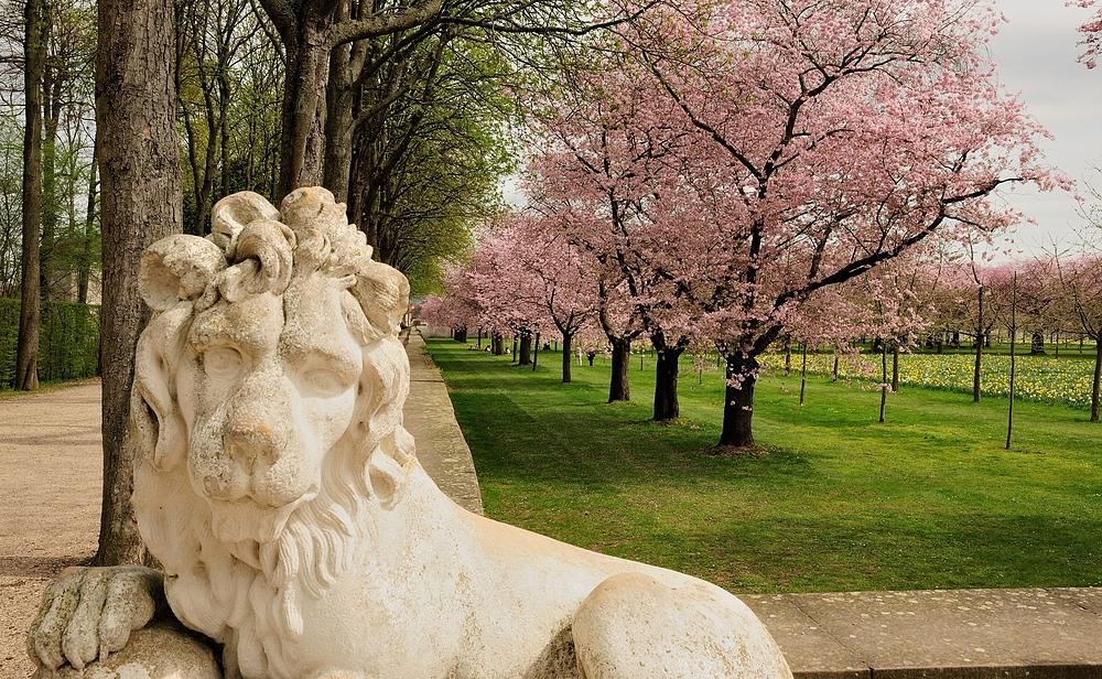 Ich wache über die Kirschblüten im Schlosspark vom Schloss Schwetzingen.