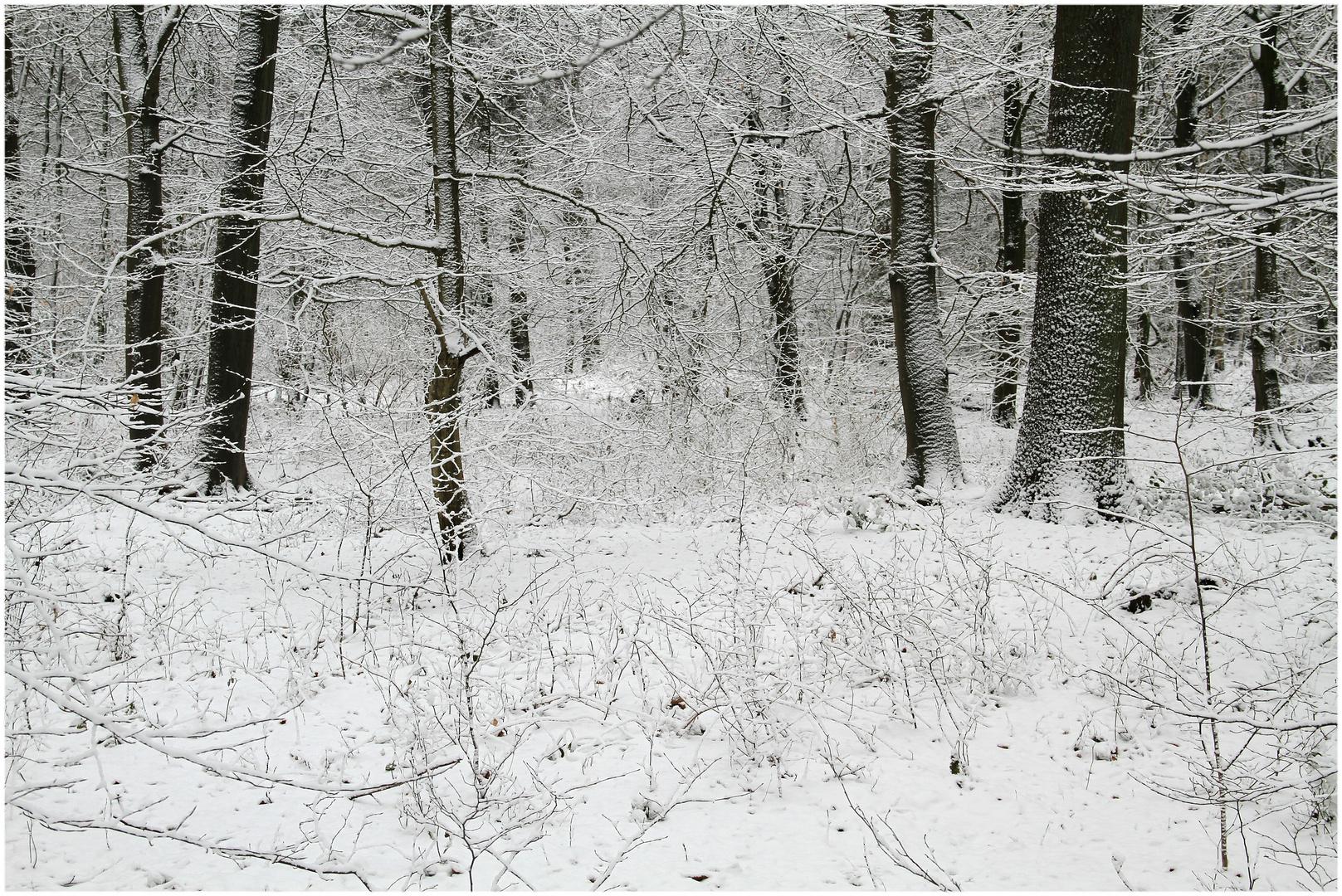 ich war heute im Wald ...