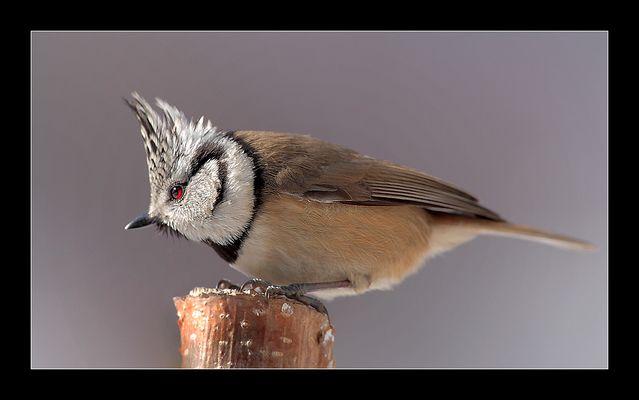 ich war heute mal Vögeln ... #2