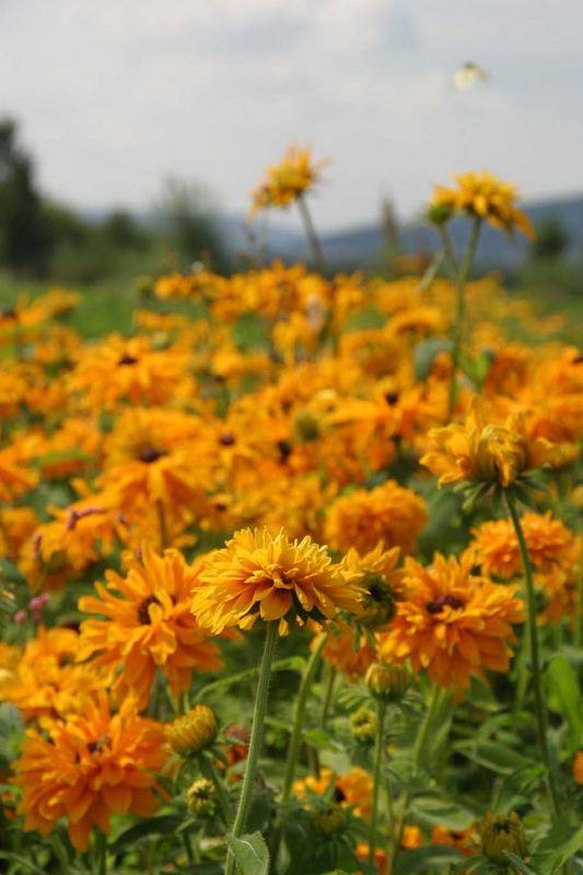 Ich weiß nicht wie diese gelben Blumen heißen...