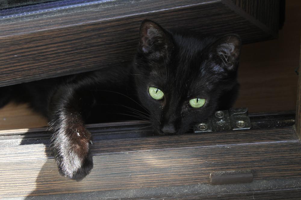 ICH will auch auf den Balkon