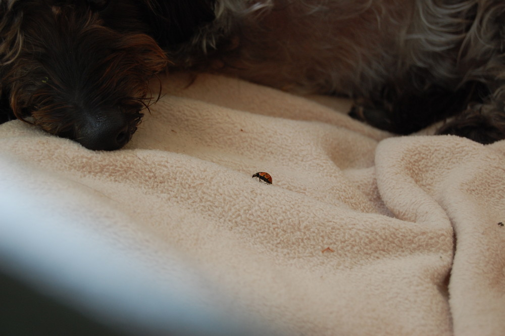 Ich will dir gleich fressen...du kleiner zottliger Hund!!!