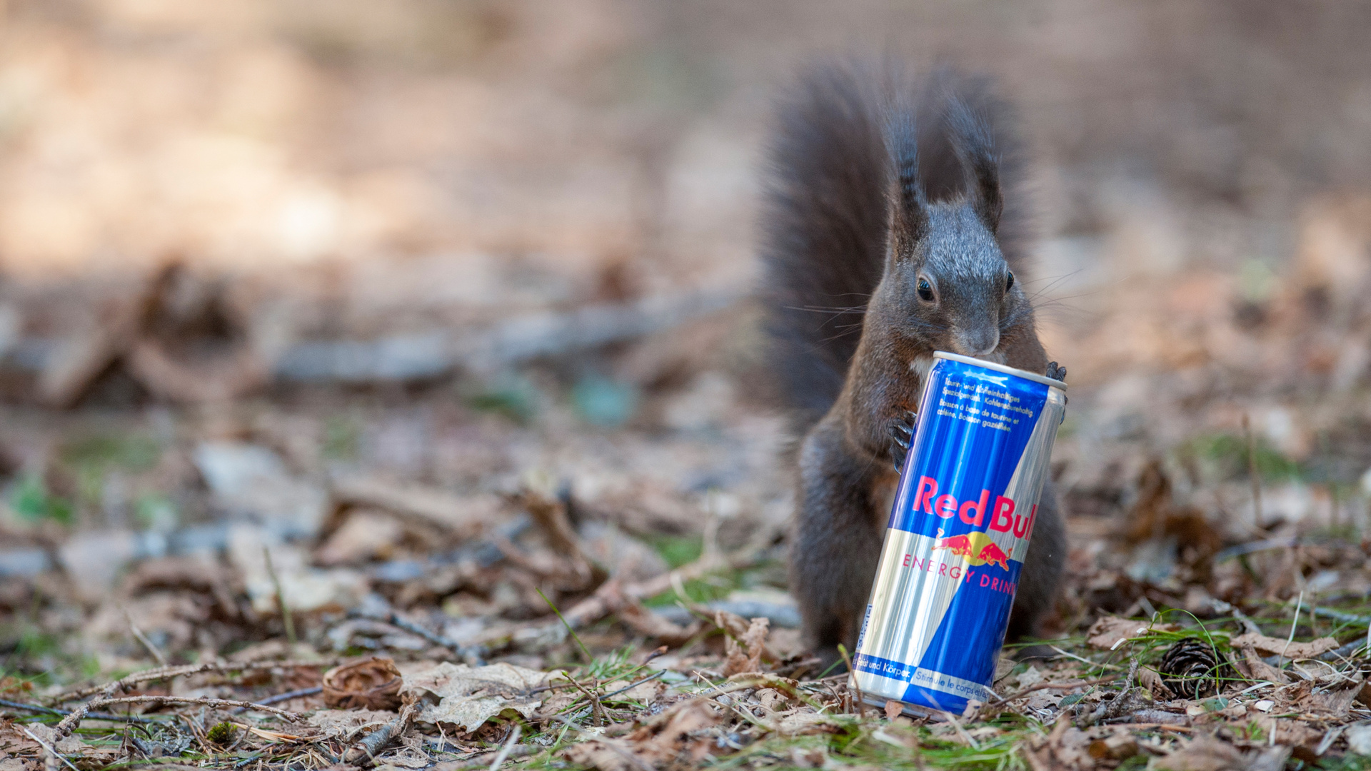 Ich will ein Flughörnchen werden. Deshalb trinke ich Red Bull!