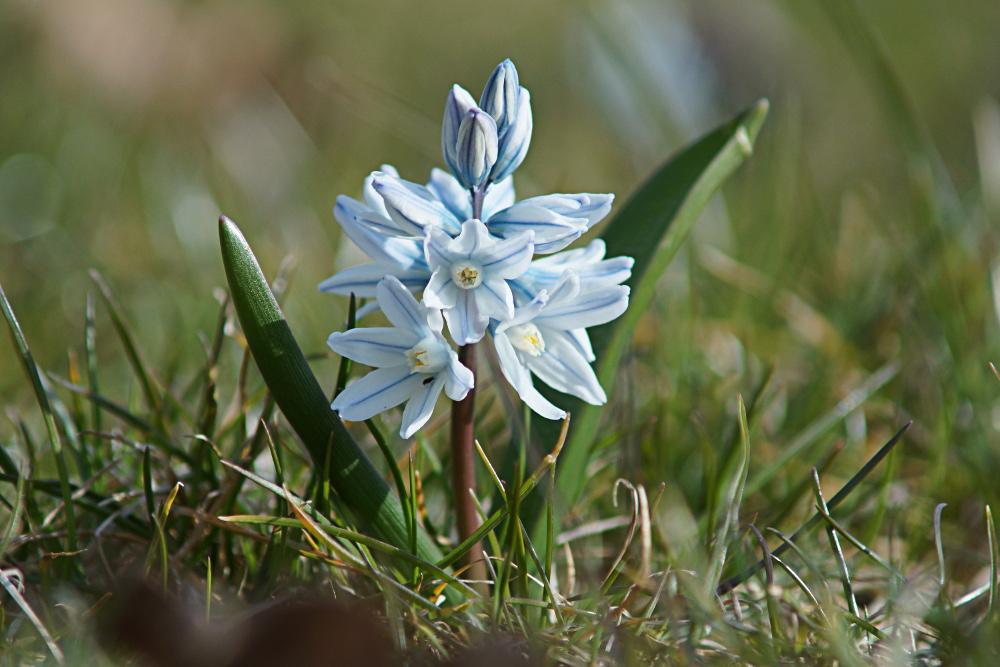 Ich will endlich Frühling für Alle!