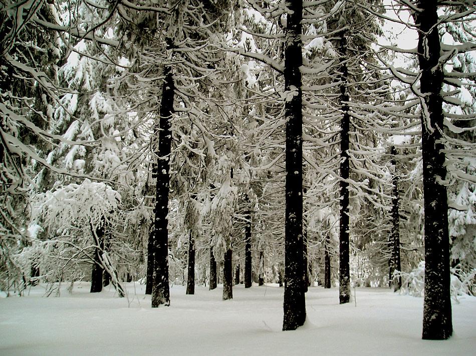 Ich will Schnee, Schnee, Schnee und zwar so, so, so......