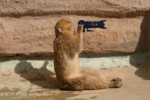Ich will zu fotocommunity!!!!!