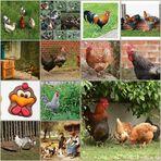 ich wollt´, ich wär´ ein Huhn ...