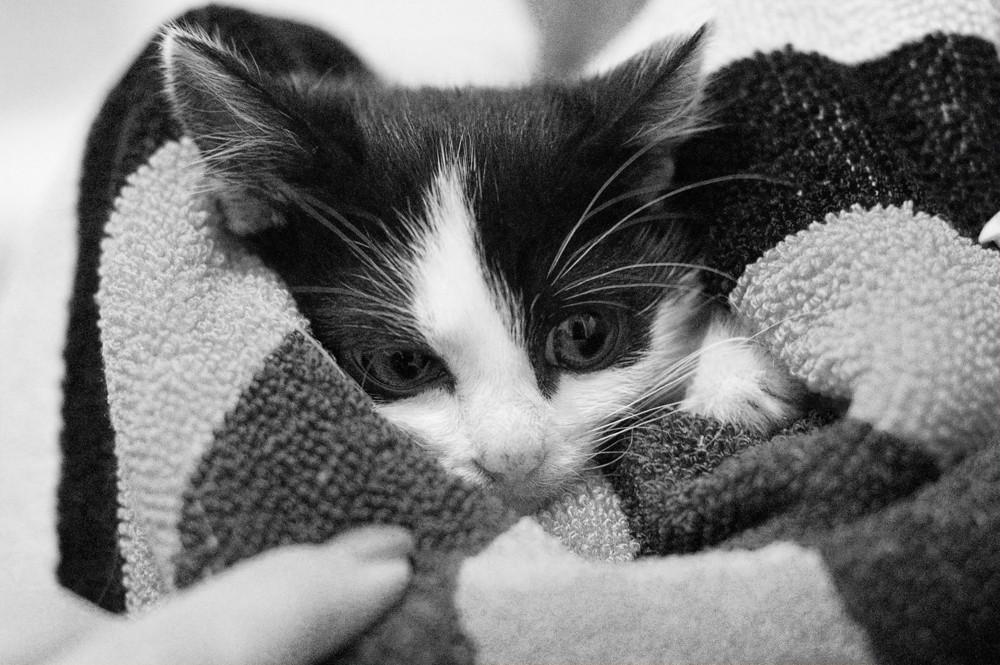 *Ich wünsch mir ne kleine Miezekatze..*