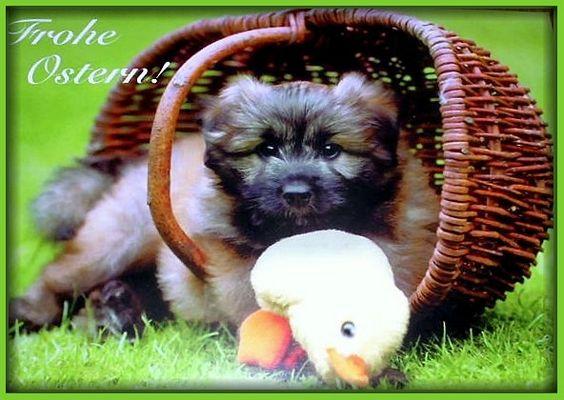 Ich wünsche allen Buddies schöne Ostertage