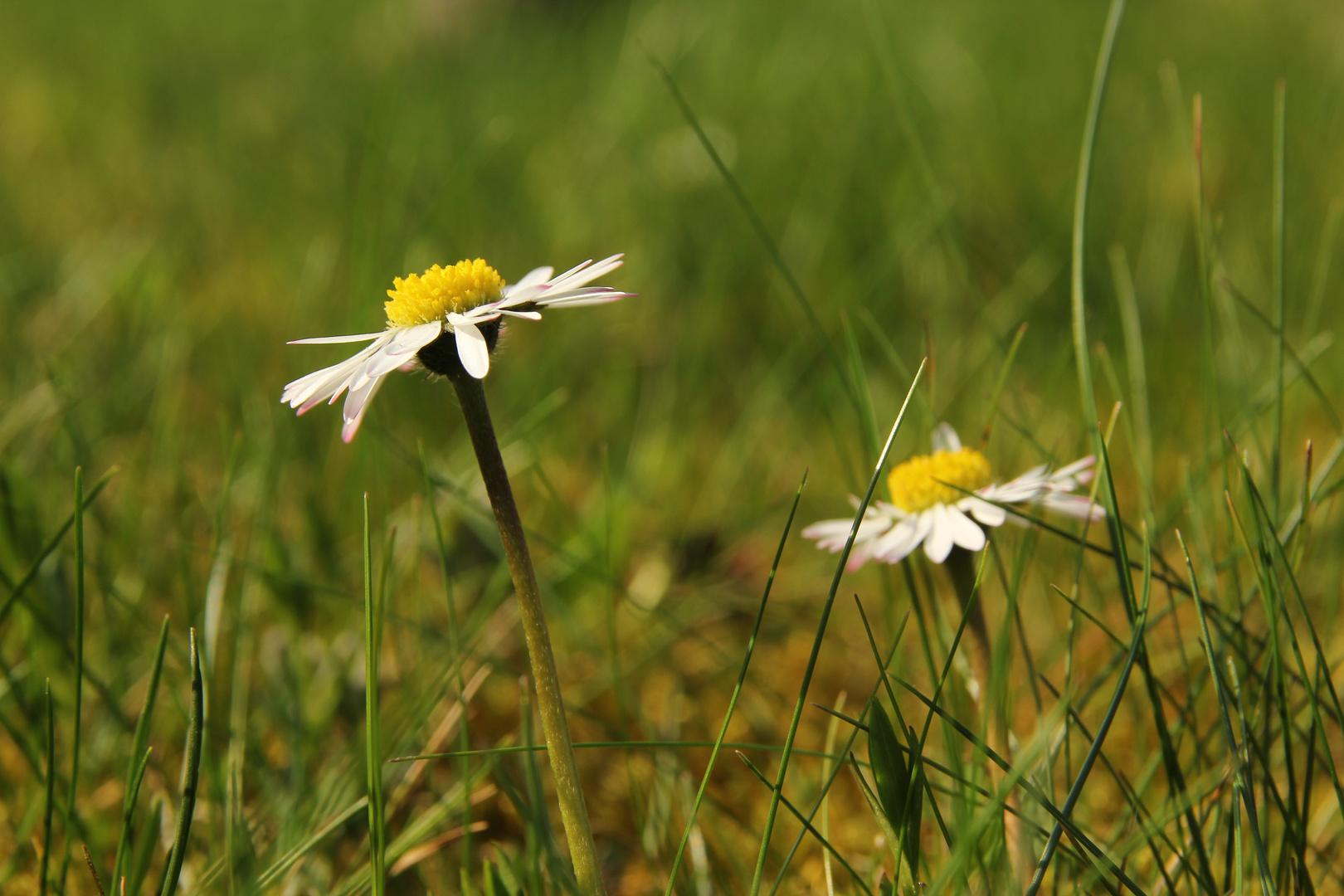 Ich wünsche allen eine schöne Frühlingswoche!